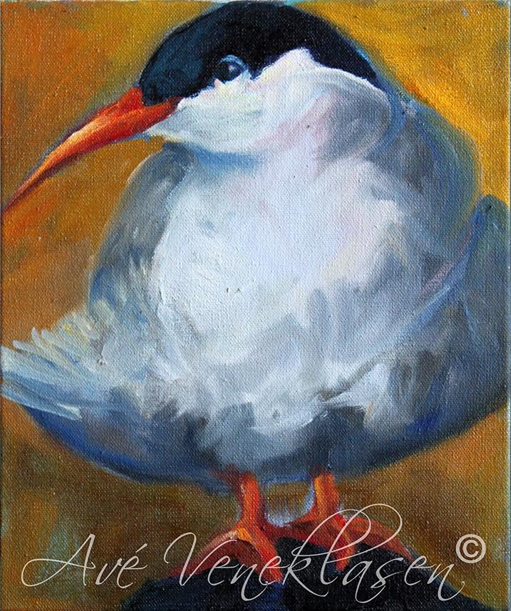 Ave_Veneklasen_Birds_ArcticTern_OilPainting