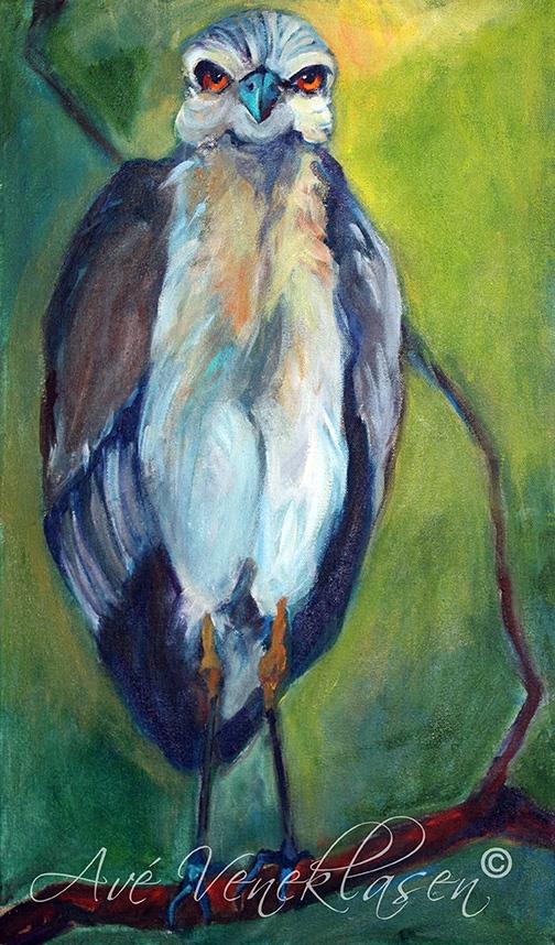 Ave_Veneklasen_Birds_YellowCrownedWhiteHeron_OilPainting